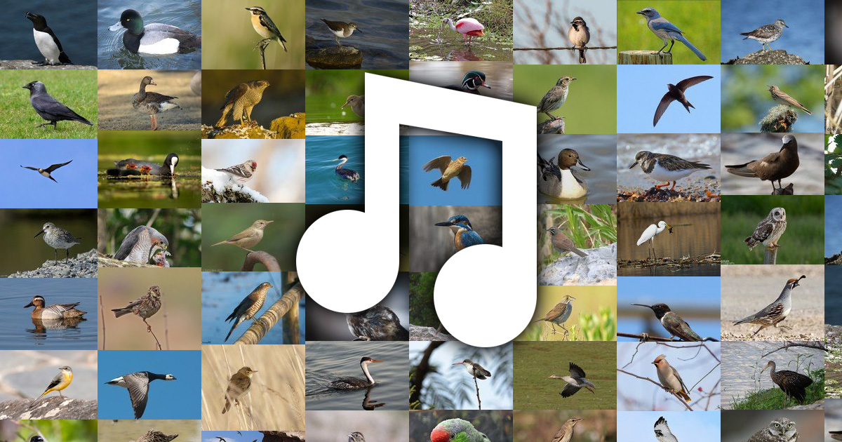 Bird sounds and bird calls in USA & Canada (602 species)